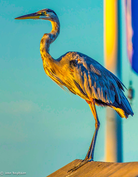 Watercolor Beach Egret Florida