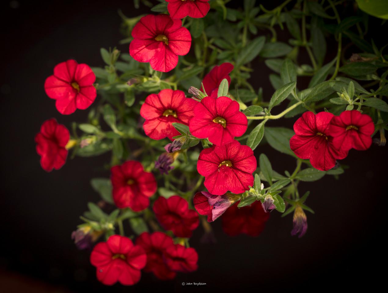 Front Yard flowers Macro
