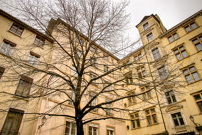 Tree and buildings, Lyon