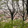 Spring and rooftops, Lyon