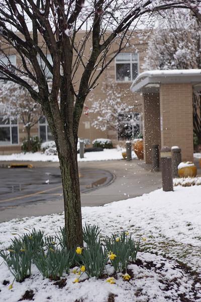Spring Snow at JHR