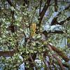 SpringSnowstorm2016-02695