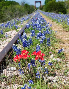 Wildflowers and old railroad tracks