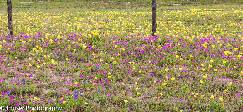 Wildflowers along a fence