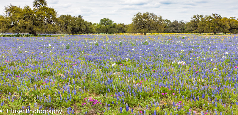 A field of colorful wildflowers
