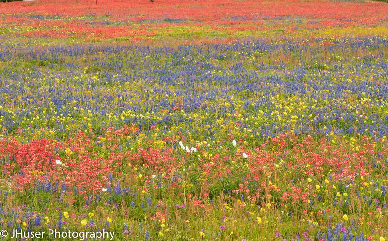 Spring in Texas brings colorful wildflowers