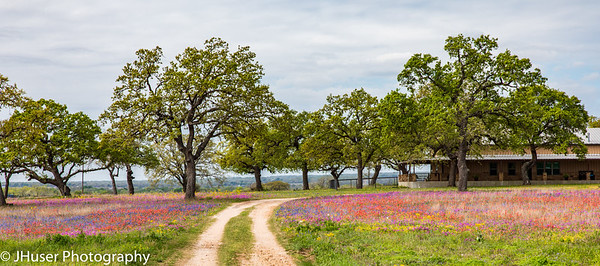 Wildflowers by the Ranch house