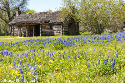 Wildflowers and an old log cabin