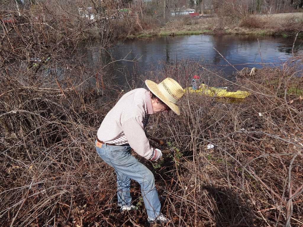 . Larry Lapham of Billerica worked along the banks of the Shawsheen River. Photo by Mary Leach