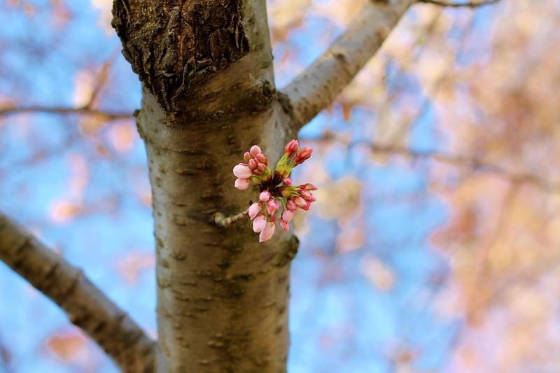 FINALLY, Spring has come!