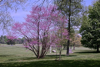 Spring at the Princeton Battlefield  State Park