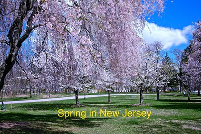 Spring In New Jersey