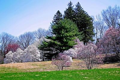 The Frelinghuysen Arboretum
