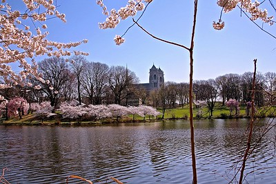 Sacred Heart Cathedral as Seen From Branch Brook Park in Newark, NJ