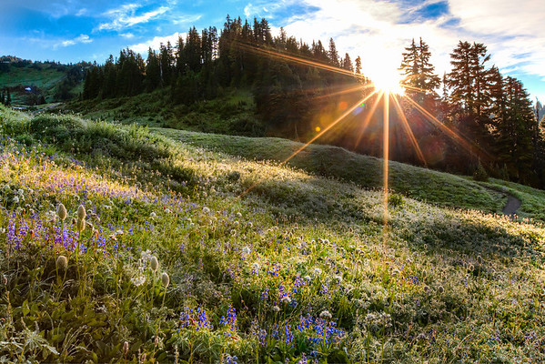 The Rising Sun Breaks Upon the Wildflower Meadows in Paradise