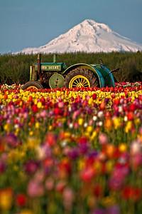 The Famous John Deere Tractor at Wooden Shoe Tulip Fields