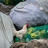 Kayole Recycling 14