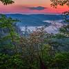 Mountain Laurel at Sunrise