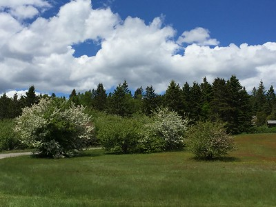 spring on Campobello