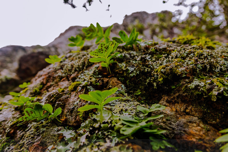 Ferns on a Rock