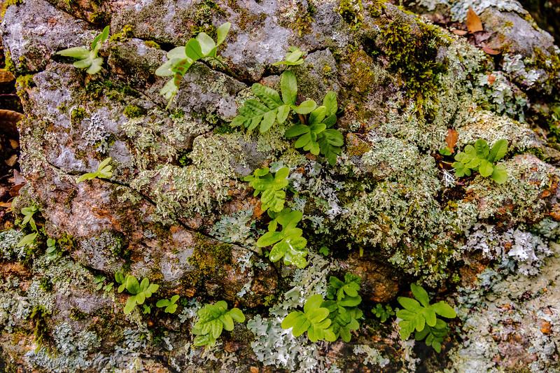 Ferns, Lichen, Moss, Rock