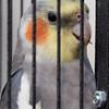 Felix happy behind bars