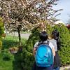 Spring in our front yard with Felix in Lauren's bird backpack