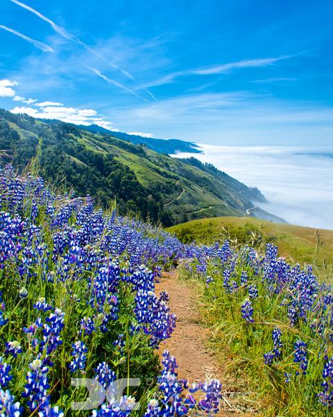 The Boronda Trail