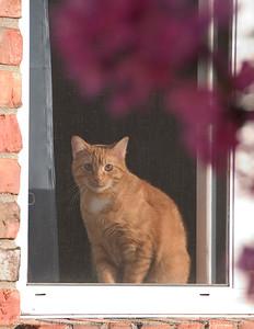 015-cat_in_window-wdsm-15may08-cvr-2561