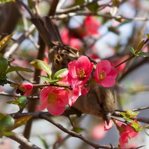 Bird Eating Flower Petals