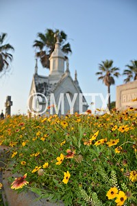 Galveston City Cemetery Wildflowers