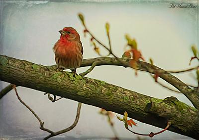 Purple Finch in Spring Oil Paint