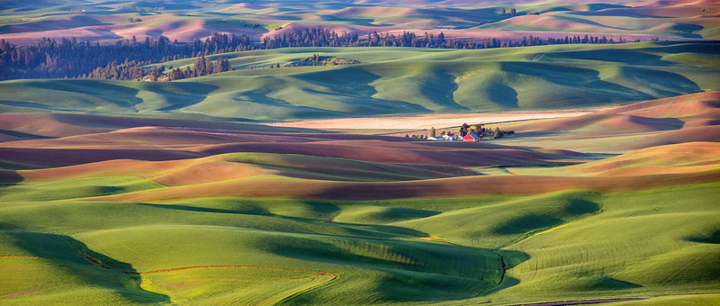 Palouse Farm Spring Panorama