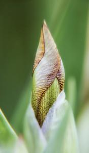 irises, phlox, etc (11)-1