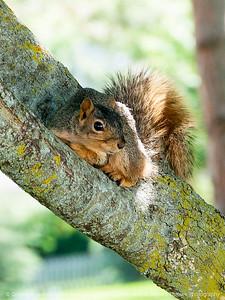 015-squirrel-wdsm-29may16-09x12-001-9438