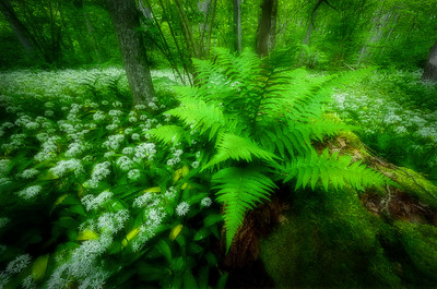 ENCHANTED FOREST 2