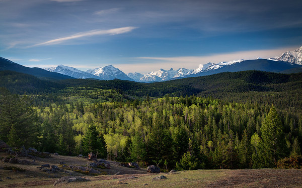 A Spring Morning in Jasper