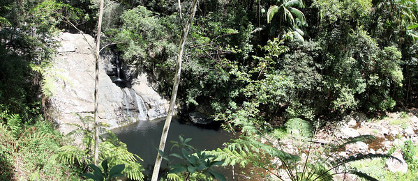 Springbrook National Park - Mount Cougal  Section  (2)