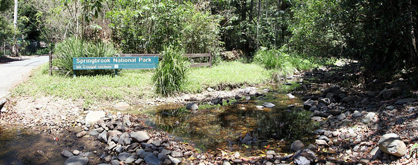 Springbrook National Park - Mount Cougal  Section  (7)