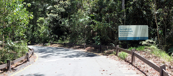 Springbrook National Park - Mount Cougal  Section  (1)