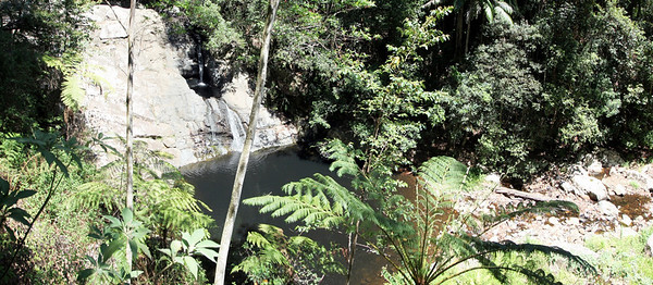 Springbrook National Park - Mount Cougal  Section  (3)