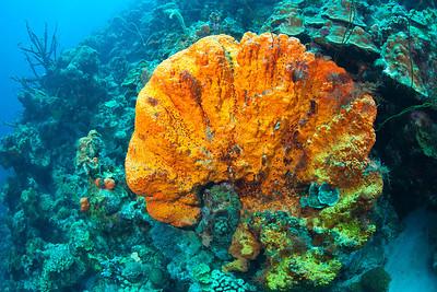 orange sponge 6563