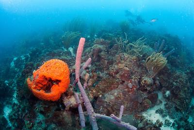 Sponge divers 6424