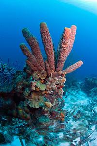 SPonge6449