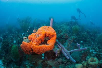 Sponge Divers 6426