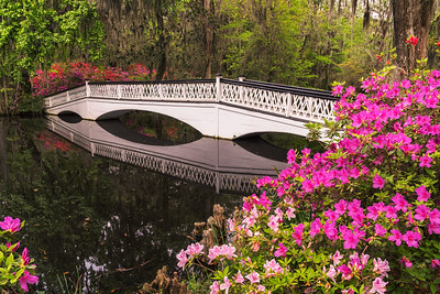 White Bridge and Azaleas