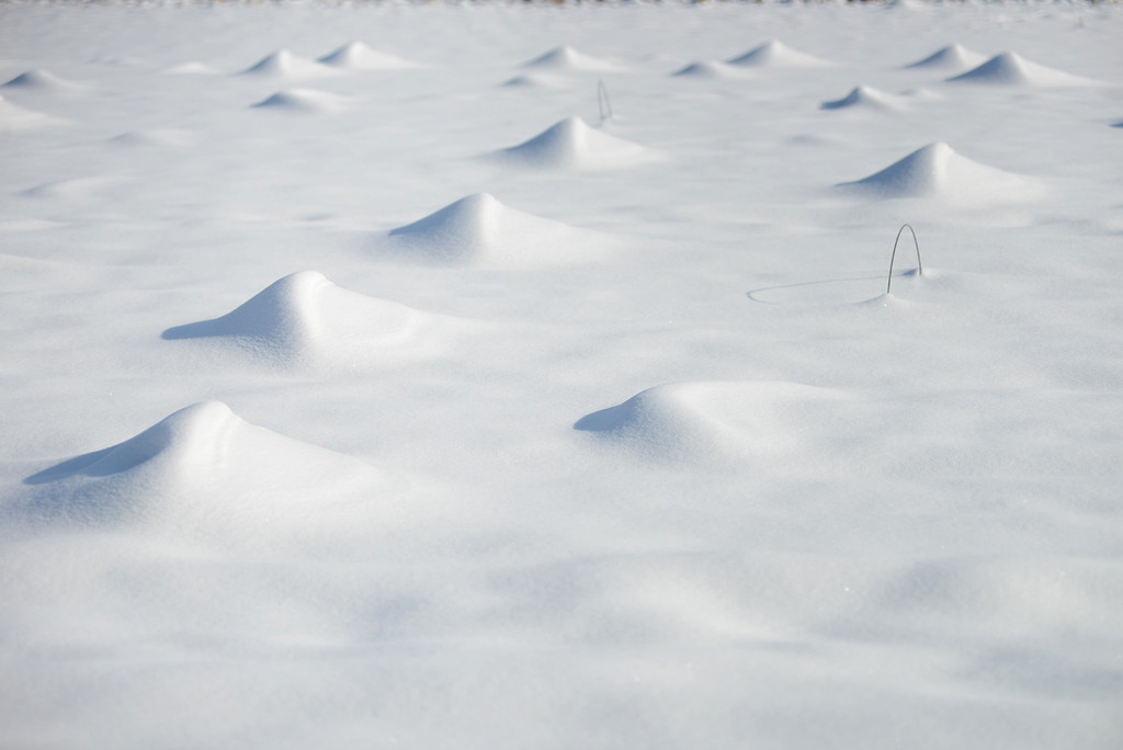 . Tania Barricklo-Daily Freeman   Unidentifiable mounds of snow  in a field on Springtown Rd. in New Paltz, NY, presumably last year\'s crop.