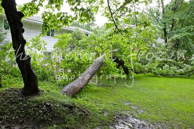 2014-06-19 Minnetonka Storm-Fallen Oak
