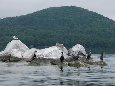 During our paddling we watched cormorants, loons and marveled at the quiet beauty of the lake.