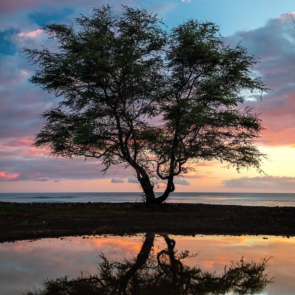 Kiawe Sunset Alu-Mini
